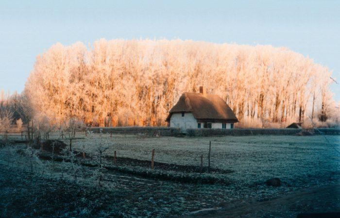 photo maison millam arbre
